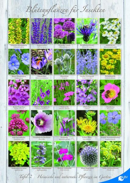 Heimische Und Naturnahe Pflanzen Im Garten Tafel 2